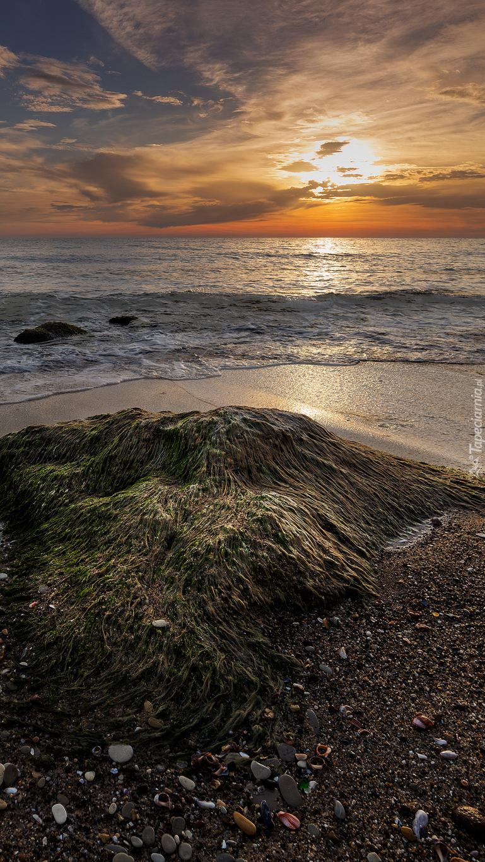 Wodorosty nad brzegiem morza