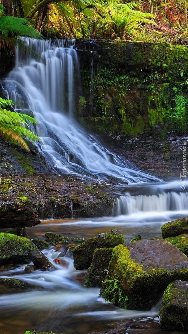 Wodospad Horseshoe Falls w Tasmanii