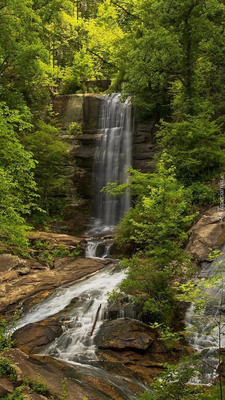 Wodospad i rzeka w lesie