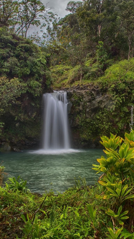 Wodospad na skałach w lesie