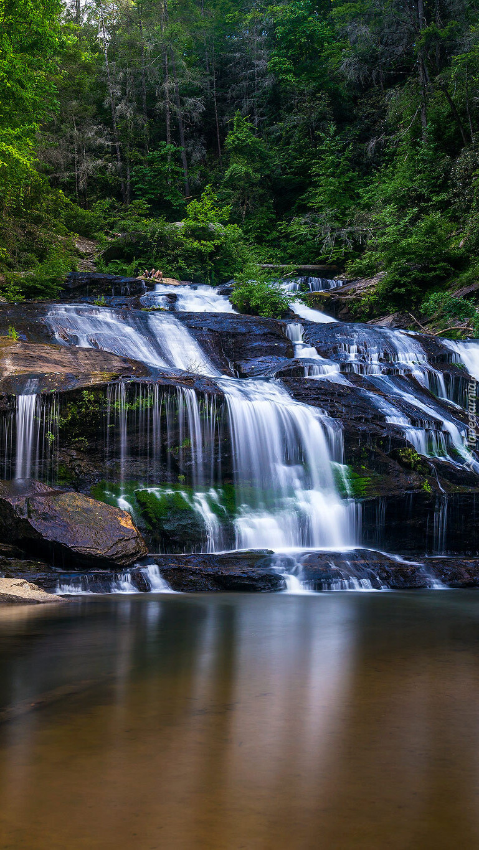 Wodospad Panther Creek Falls w lesie