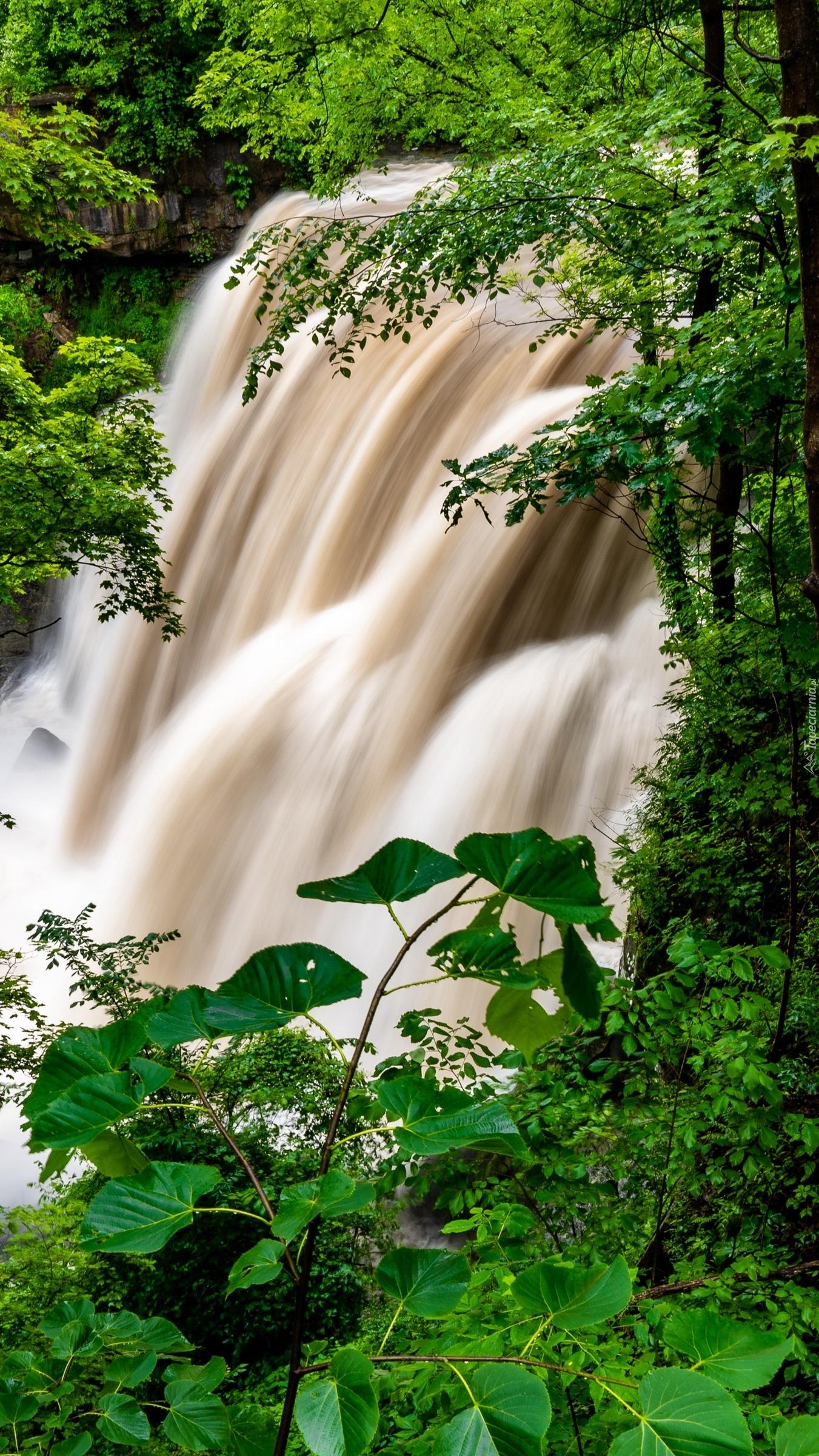 Wodospad w lesie