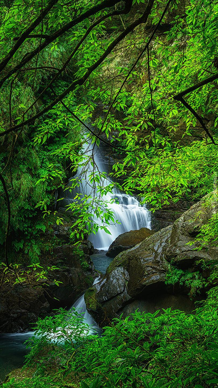 Wodospad w zielonym lesie