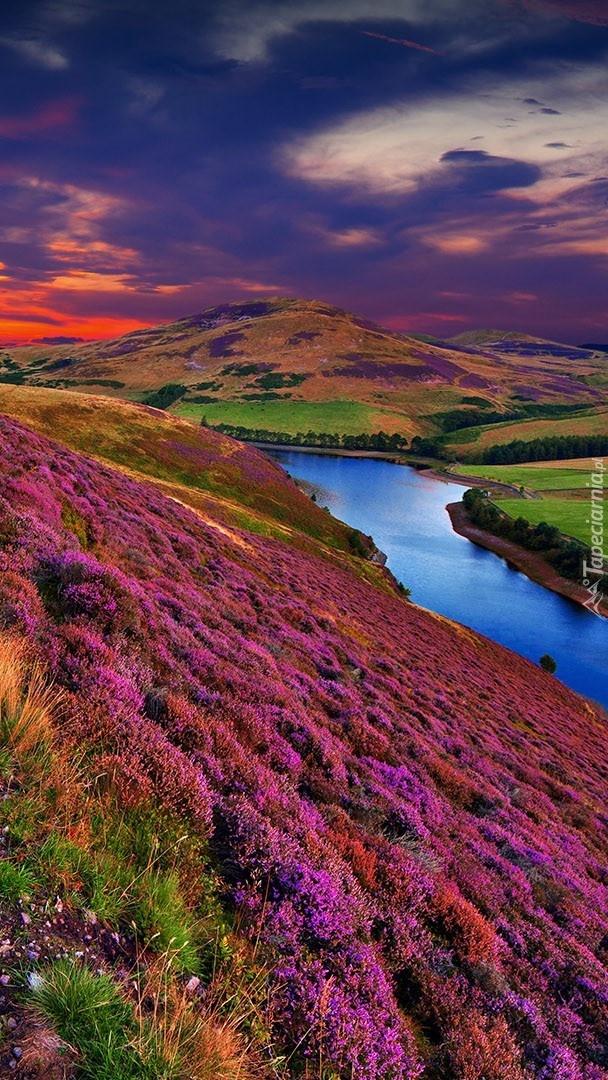 Wrzosowe wzgórza Pentland Hills