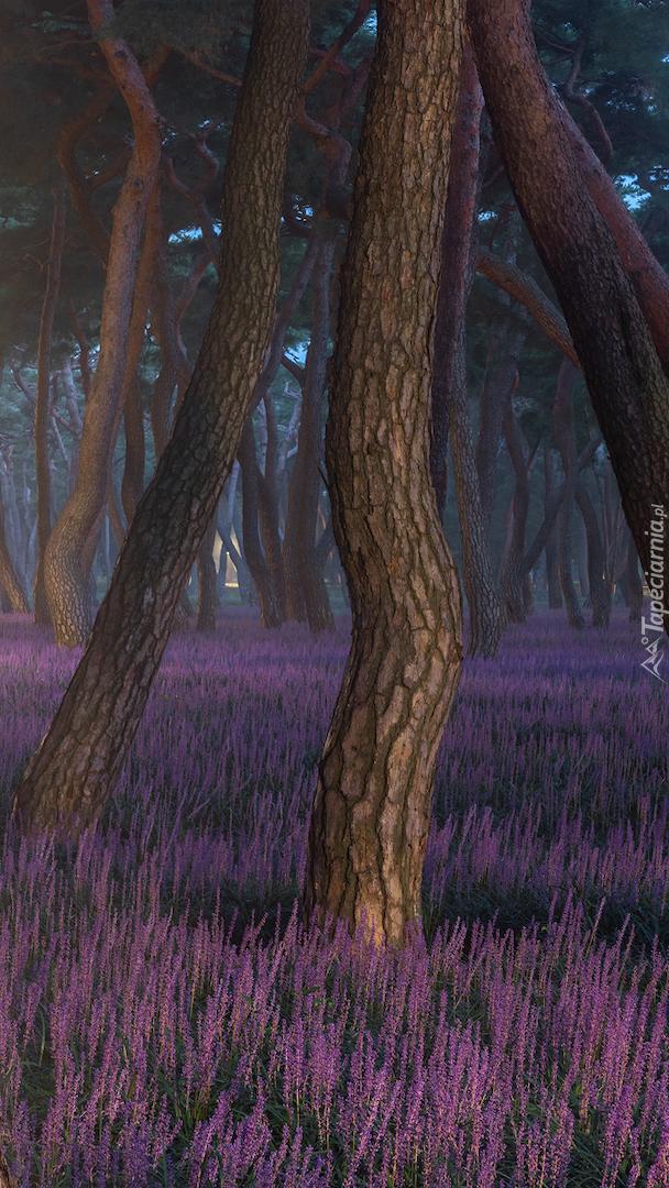Wrzosy pod drzewami w lesie