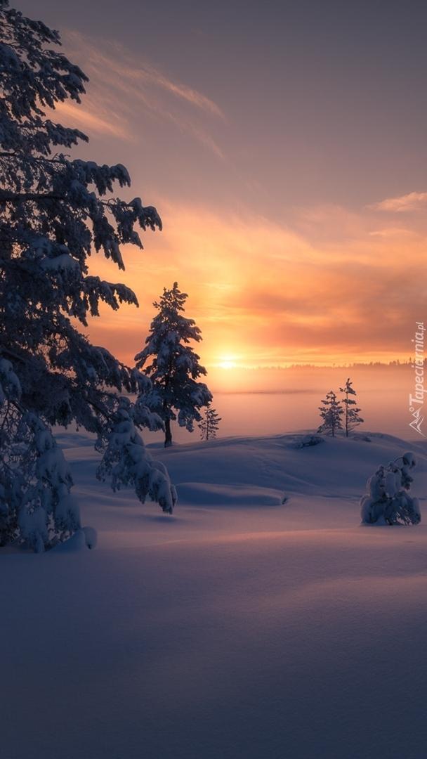 Wschód słońca nad drzewami