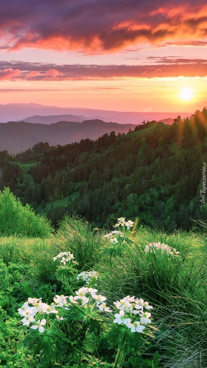 Wschód słońca nad górami i lasami