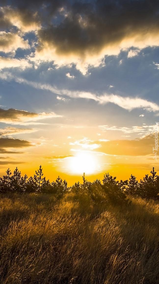 Wschód słońca nad łąką