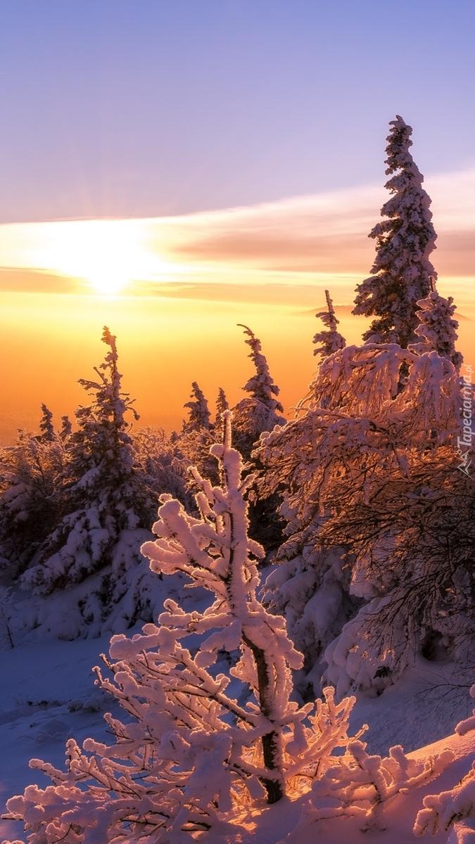 Wschód słońca  nad ośnieżonym lasem