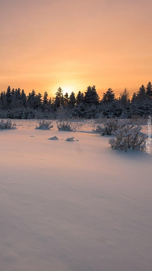 Wschód słońca nad ośnieżonymi drzewami