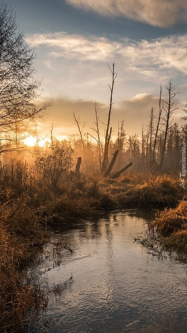 Wschód słońca nad rzeką