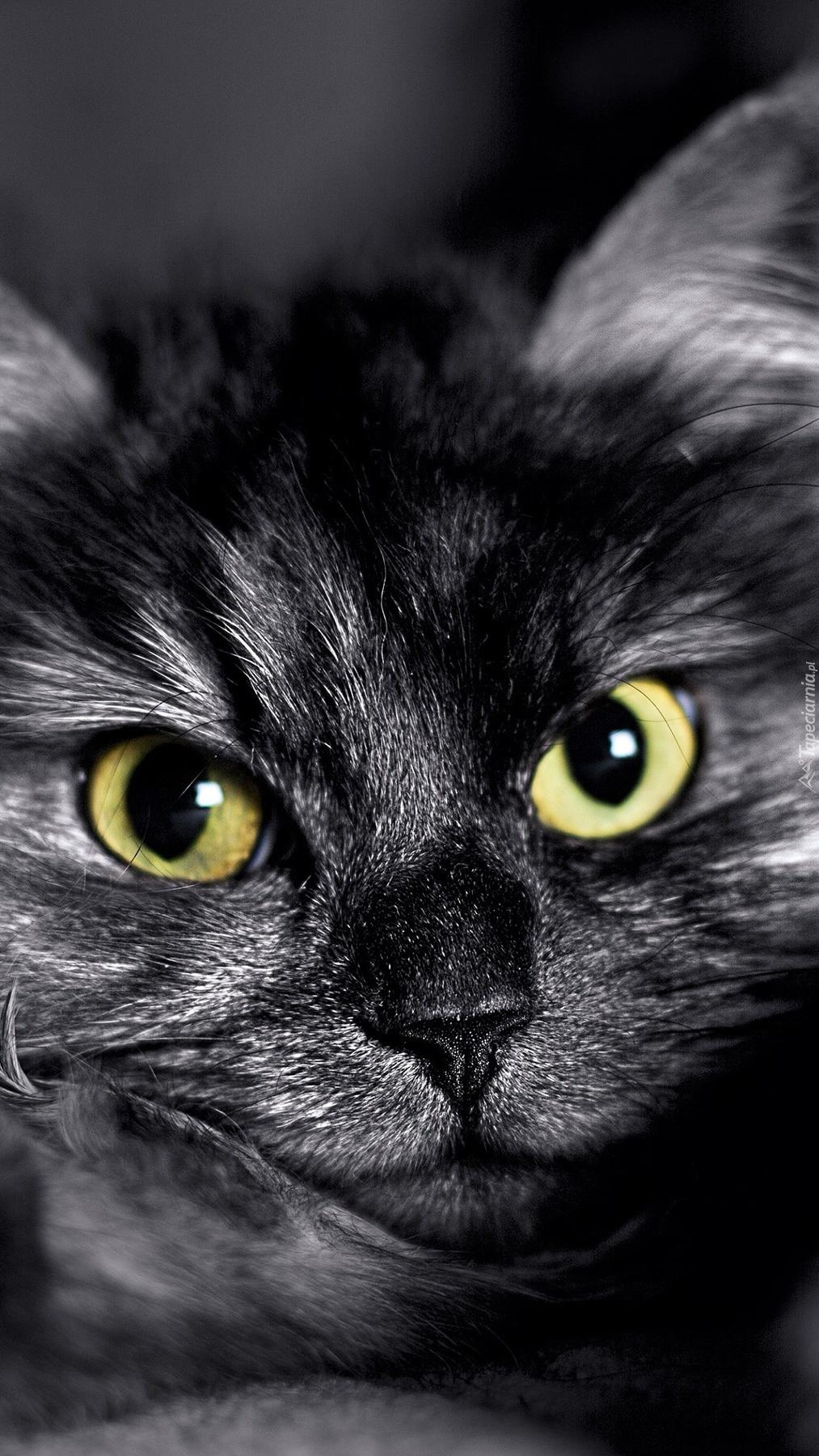 Wściekły kotek