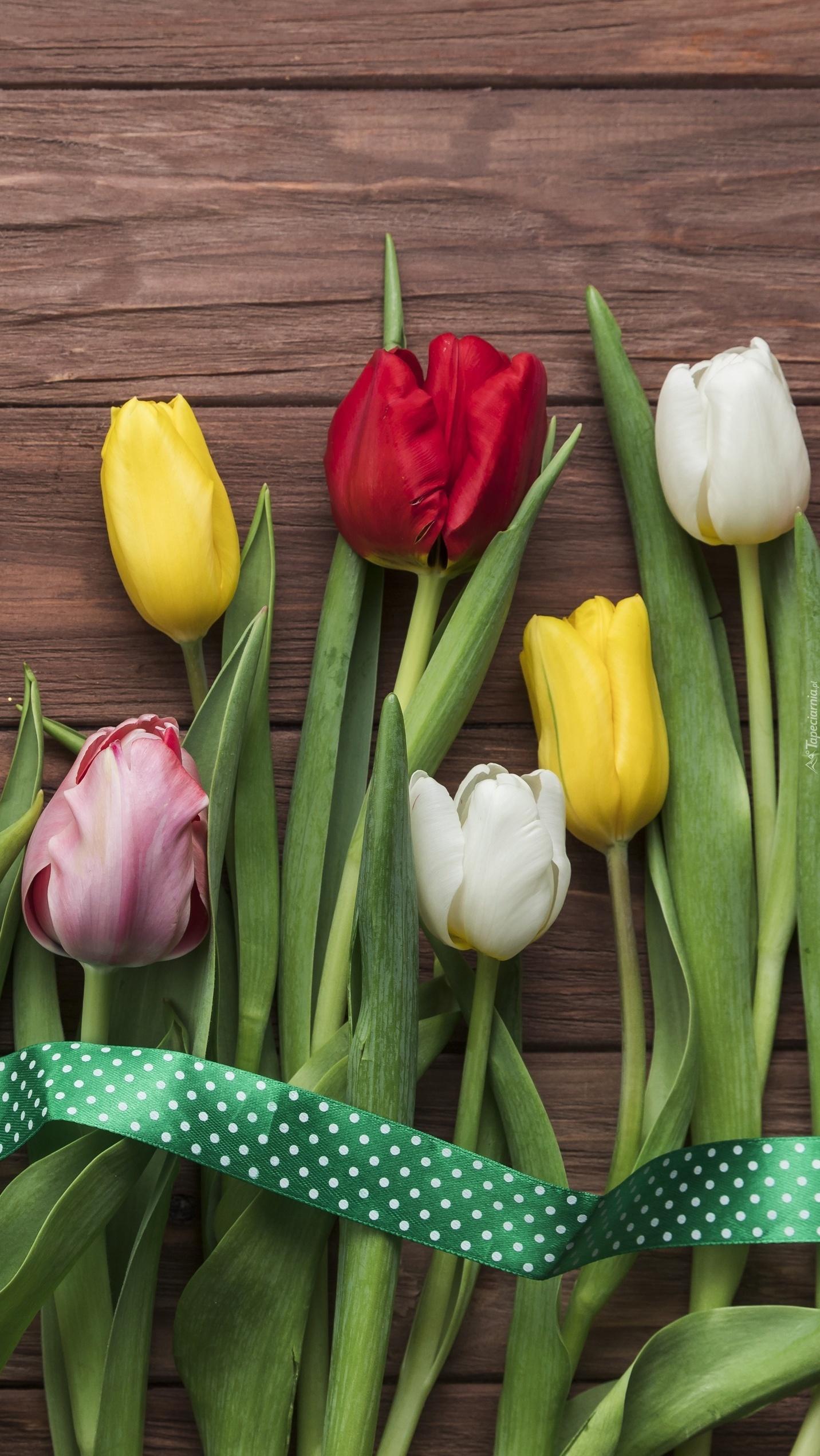 Wstążka na tulipanach