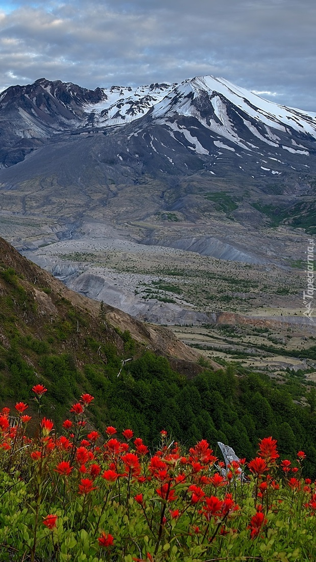 Wulkan Mount St Helens