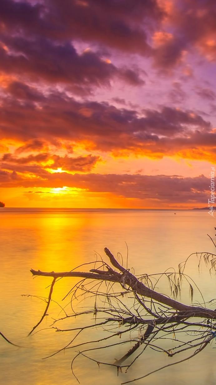 Wyrzucona na brzeg morza  gałąź w zachodzącym słońcu