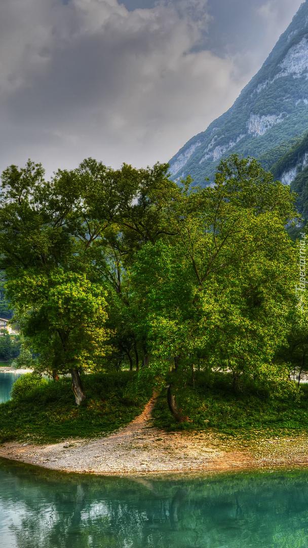 Wysepka z drzewami na jeziorze