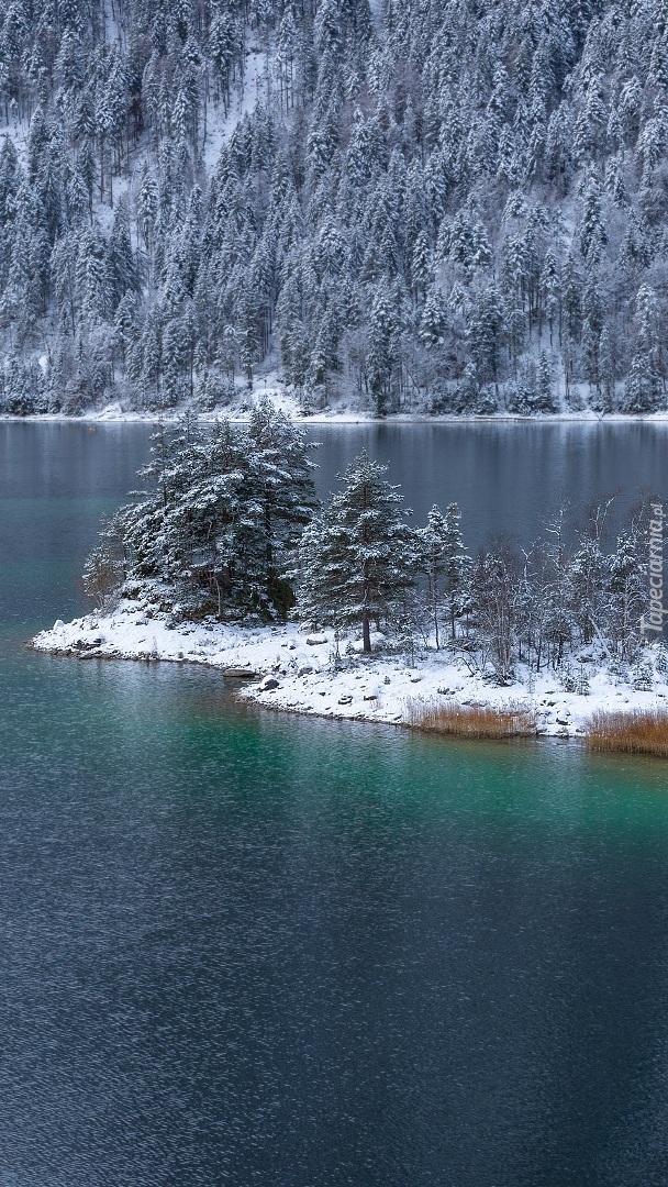 Wysepka z ośnieżonymi drzewami na jeziorze