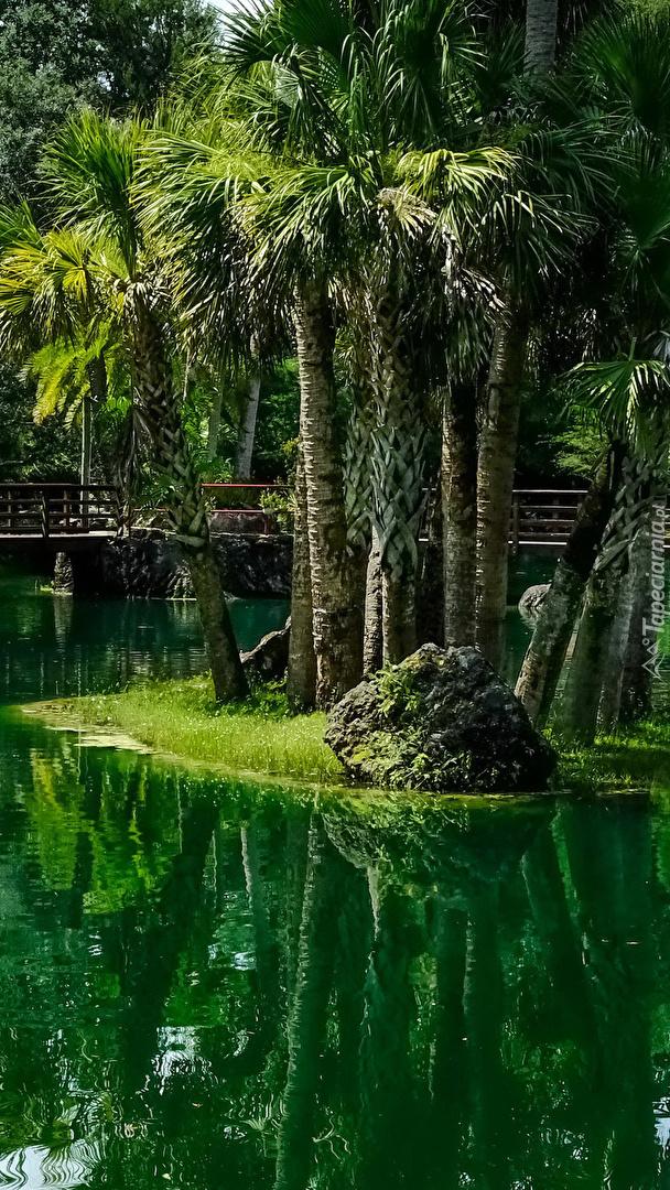 Wysepka z palmami na środku stawu