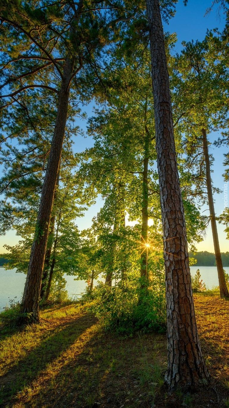 Wysokie drzewa nad jeziorem