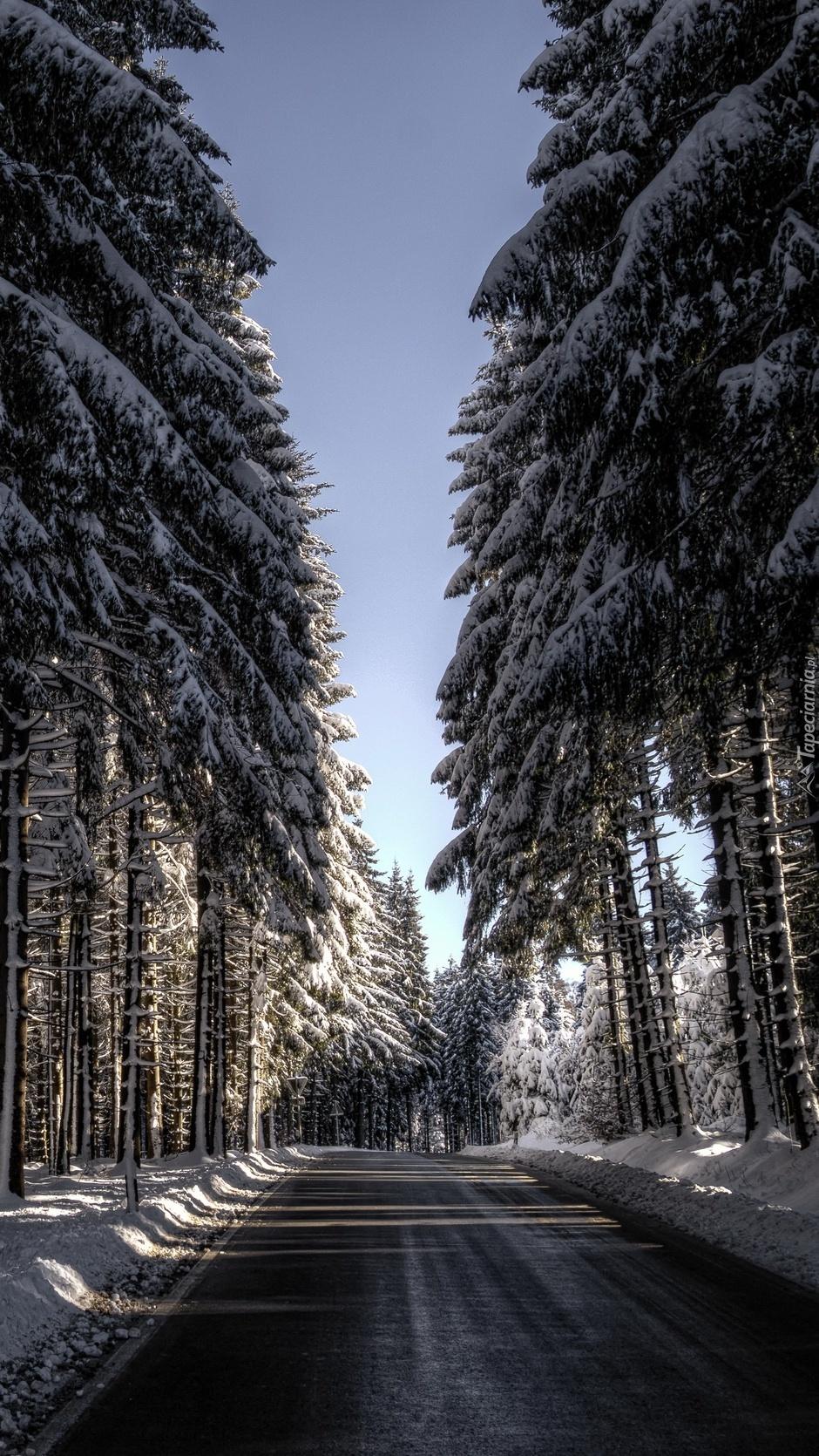 Wysokie drzewa przy drodze zimową porą