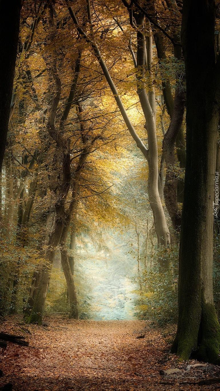 Wysokie drzewa w lesie jesienią