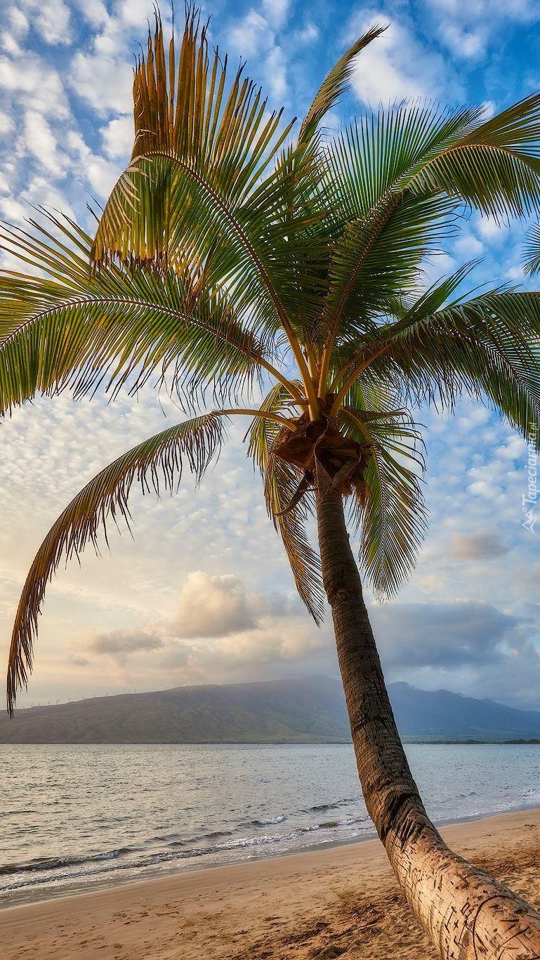 Wyspa Maui na Hawawajach