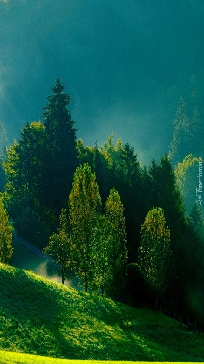 Wzgórza w objęciach mgły