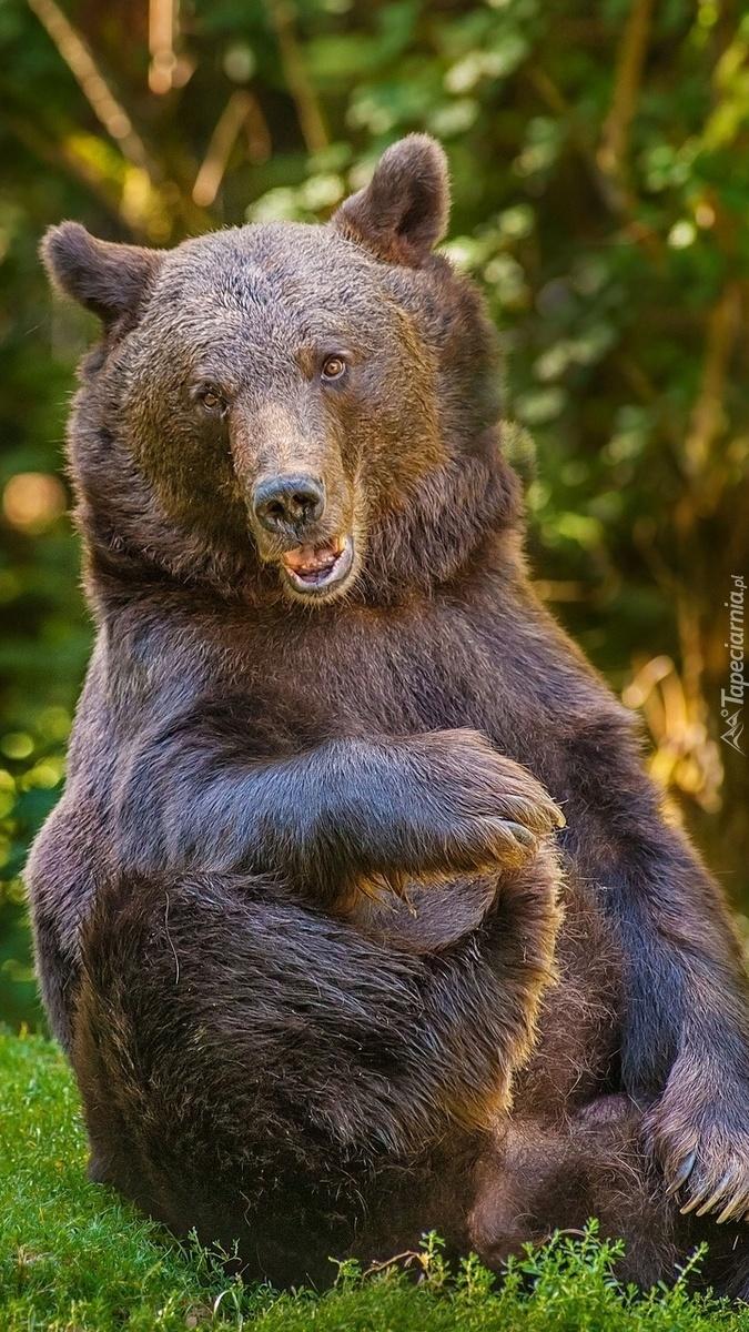 Zabawny niedźwiedź