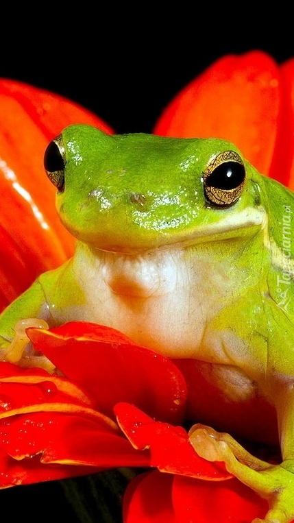 Żabka na kwiatku