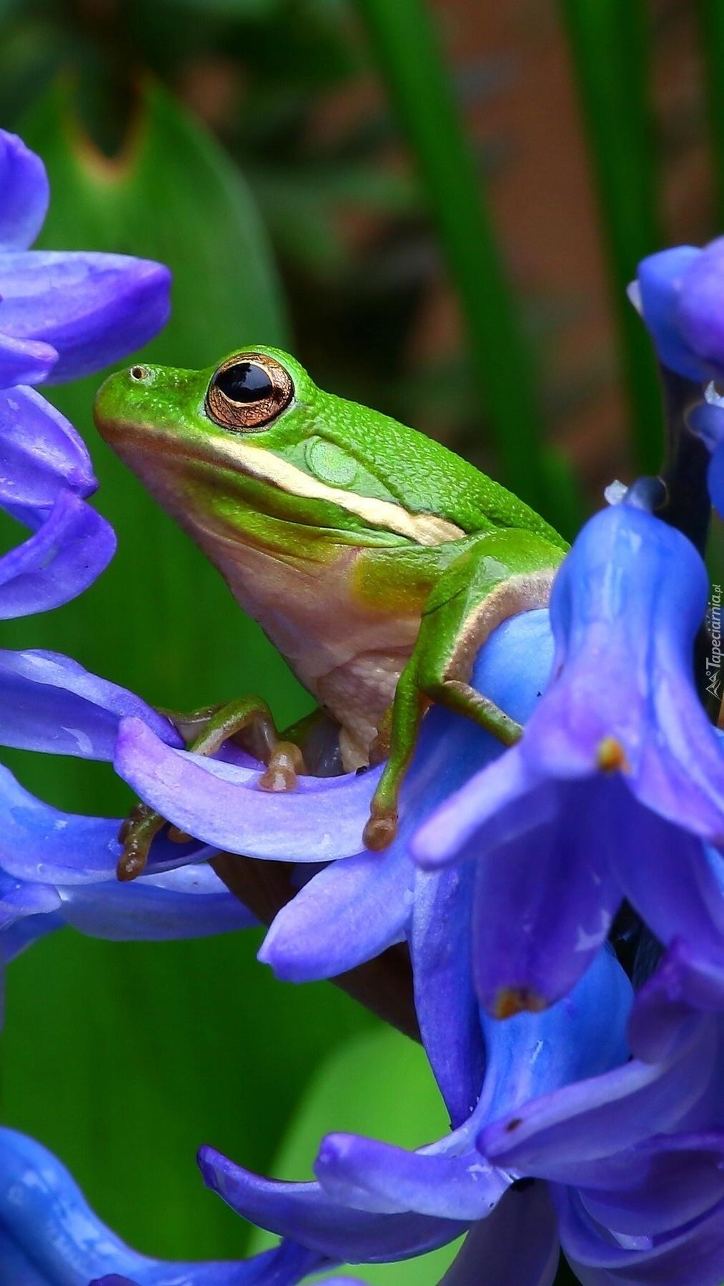 Żabka w kwiatach