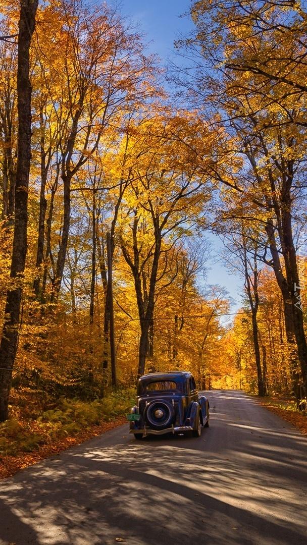 Zabytkowy samochód na leśnej drodze