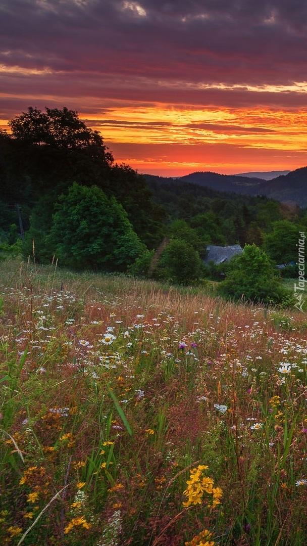 Zachód słońca nad drzewami i łąką