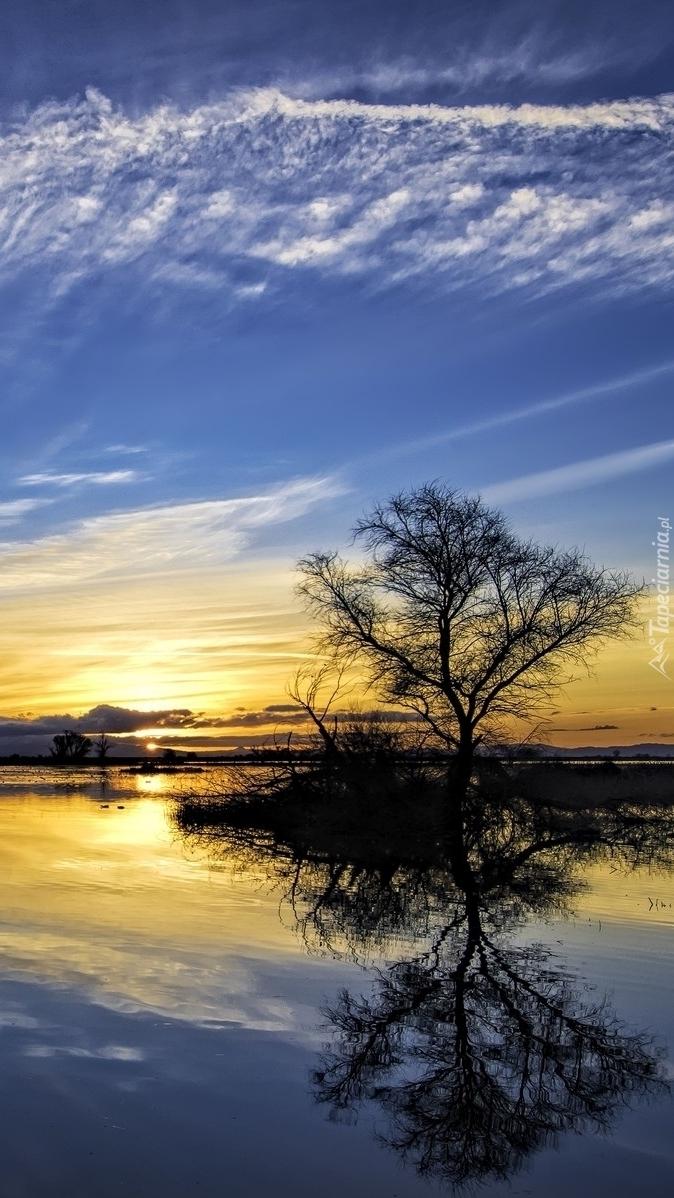 Zachód słońca nad jeziorem z drzewami