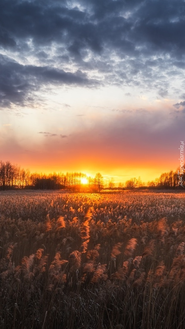 Zachód słońca nad łąką