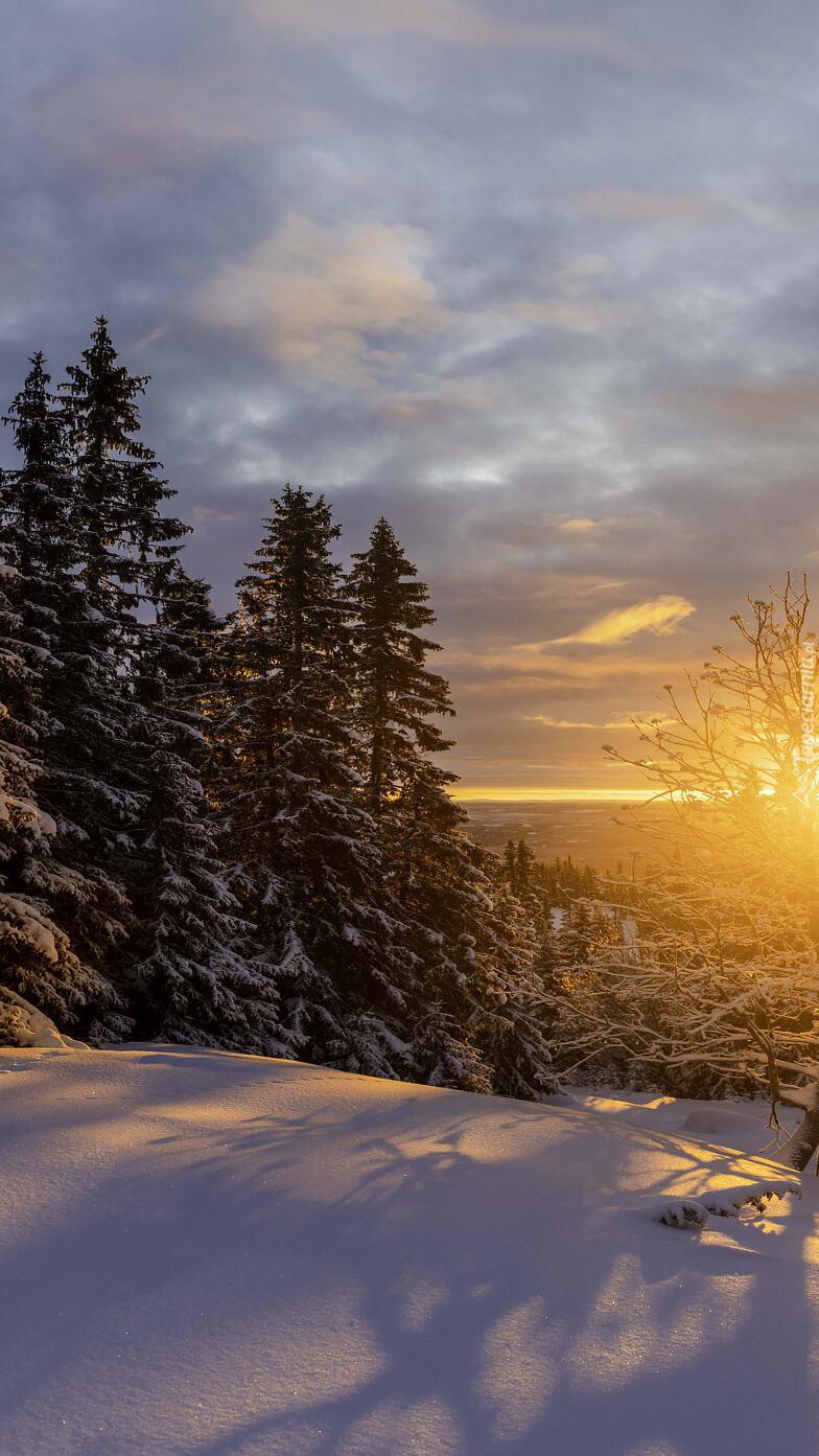 Zachód słońca nad ośnieżonymi drzewami