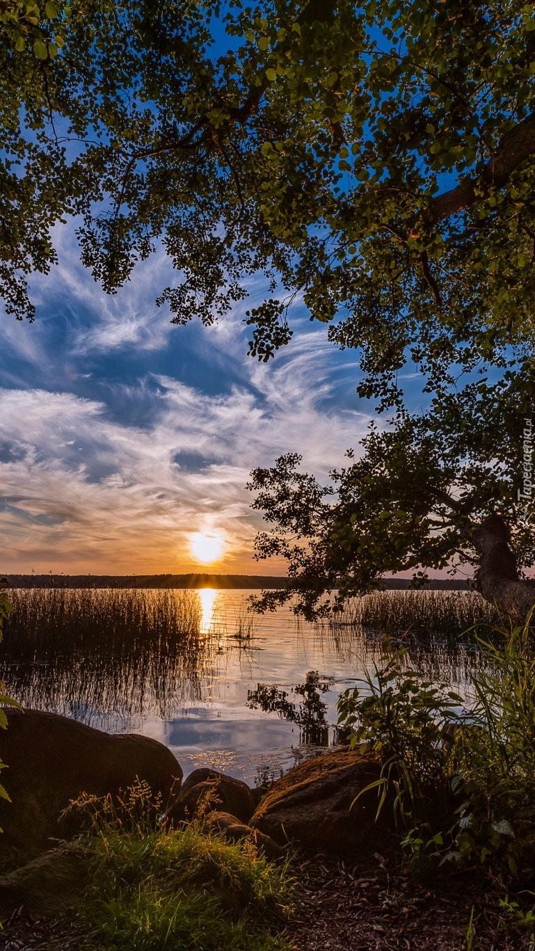 Zachód słońca nad porośniętym jeziorem