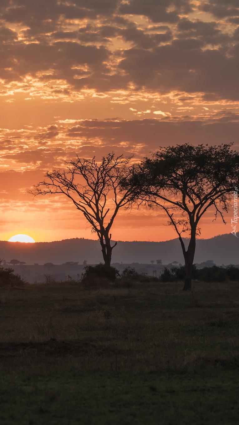Zachód słońca nad sawanną