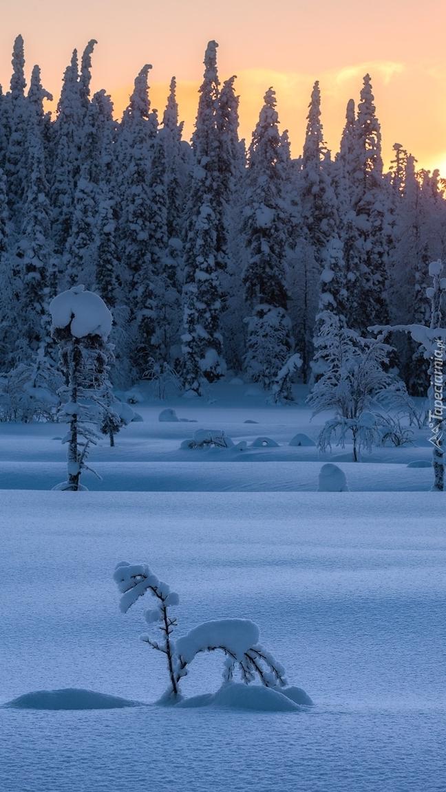 Zachód słońca nad zaśnieżonym lasem