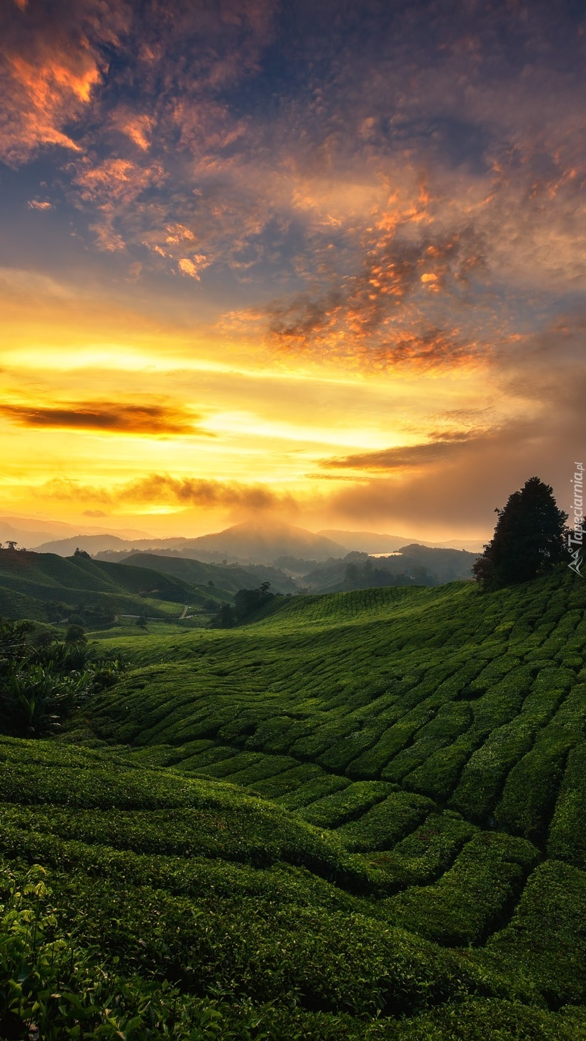 Zachód słońca nad zielonym wzgórzem