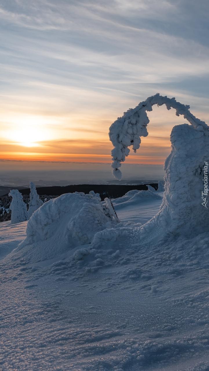 Zachód słońca nad zimowymi drzewami