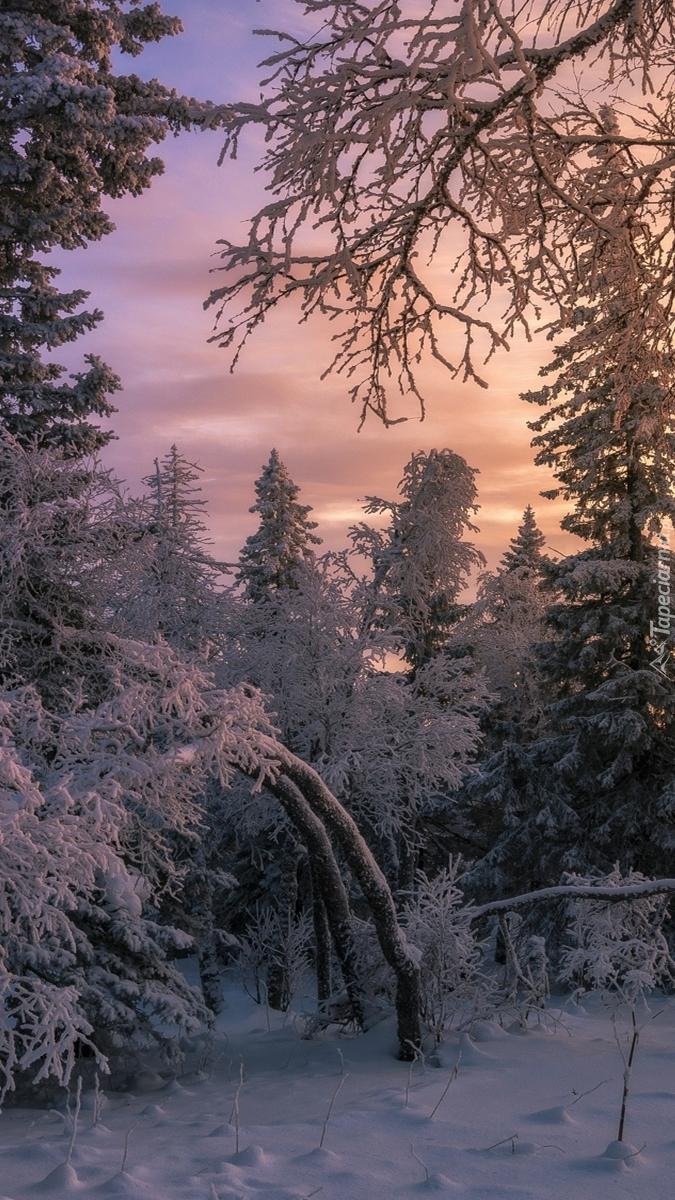 Zachód słońca w ośnieżonym lesie