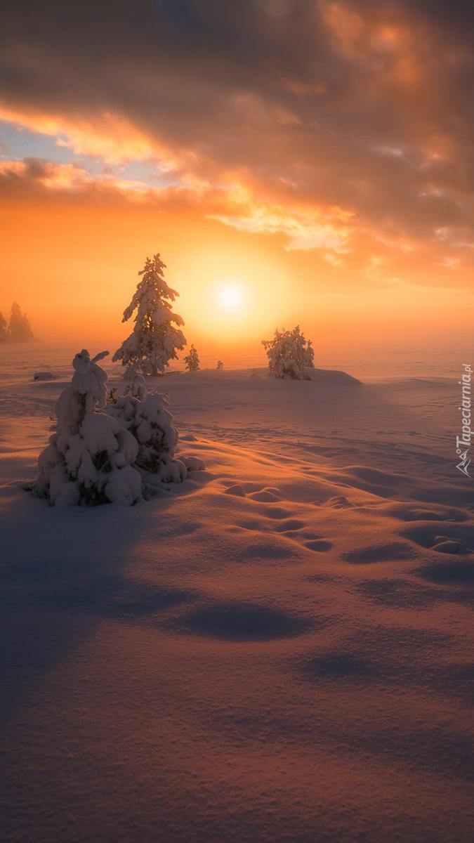Zachód słońca z zimowymi drzewami