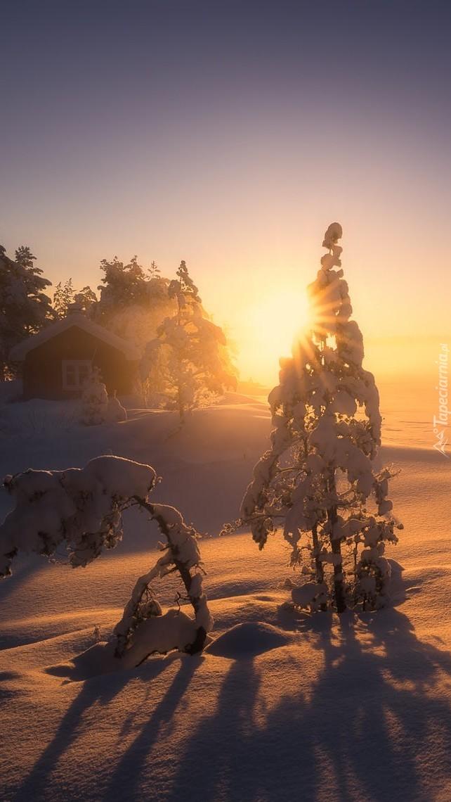 Zachodzące słońce pomiędzy ośnieżonymi drzewami