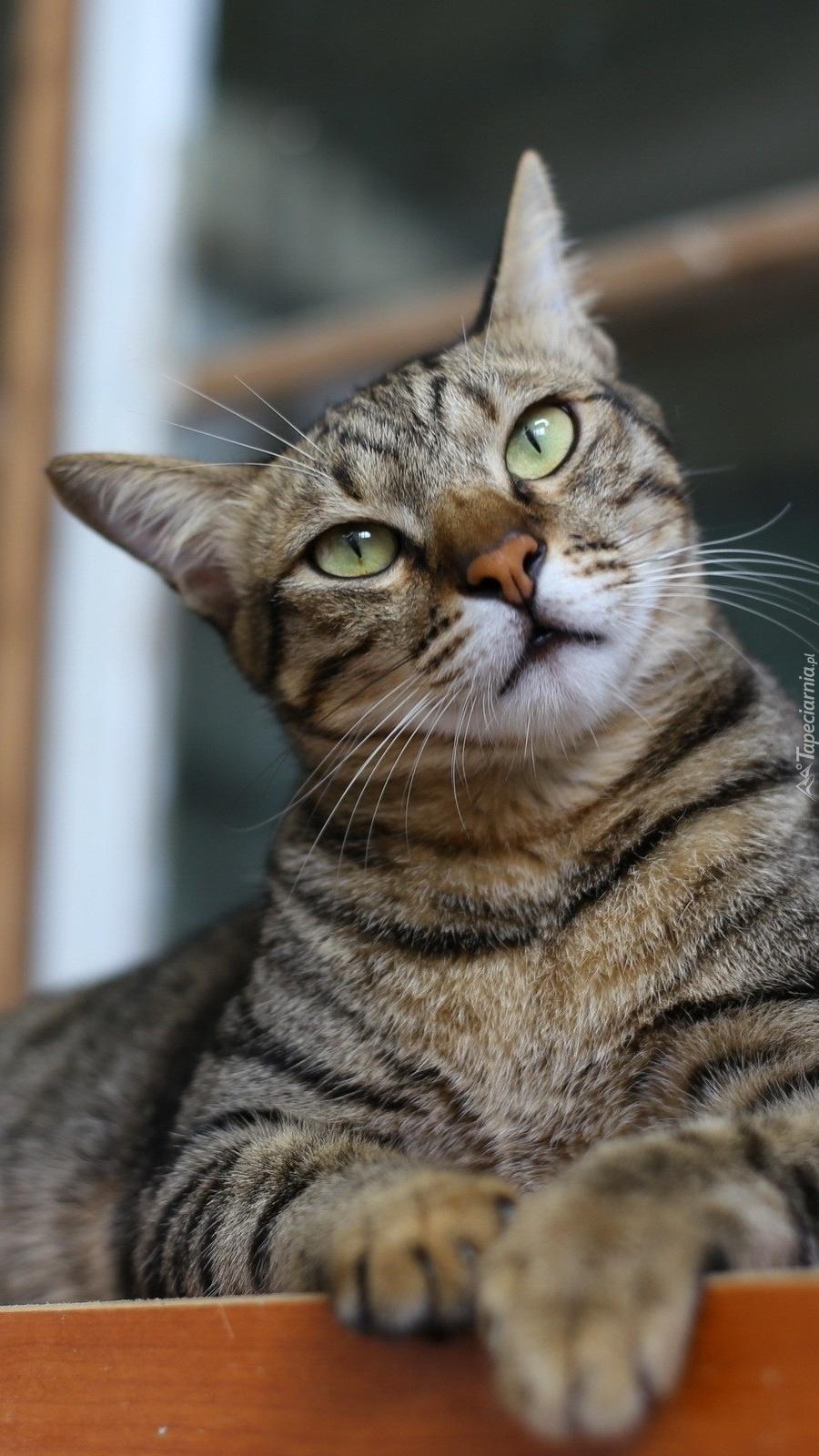 Zaciekawiony kotek