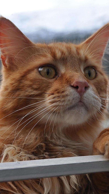 Zaciekawiony rudy kotek przy poręczy
