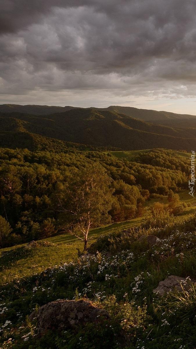 Zalesiona dolina