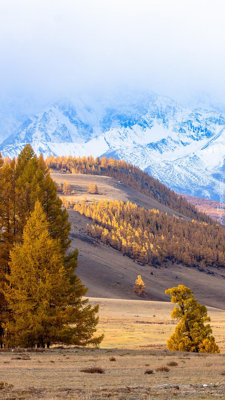 Zalesione wzgórza w górach