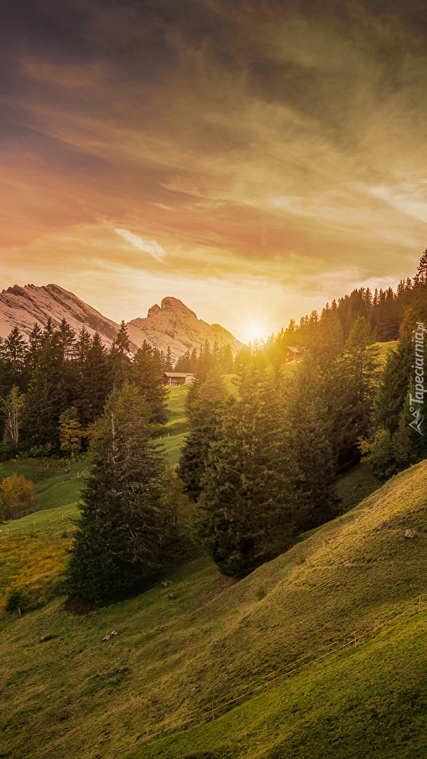 Zalesione wzgórze i góry
