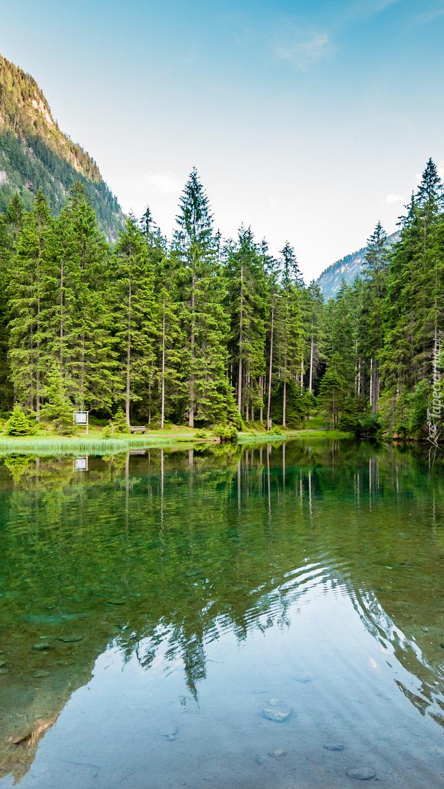 Zalesiony brzeg górskiego jeziora