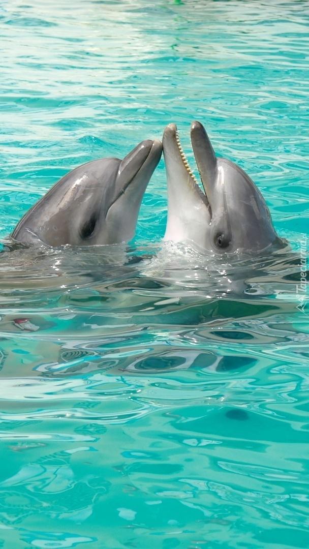 Zaloty delfinów